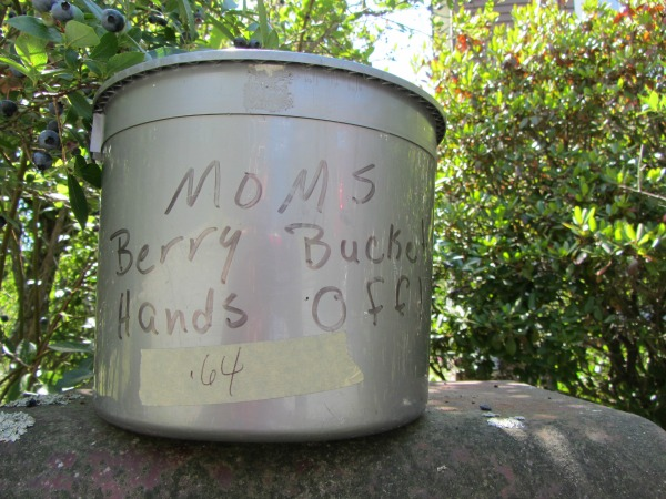 Because her berry picking bucket kept disappearing....