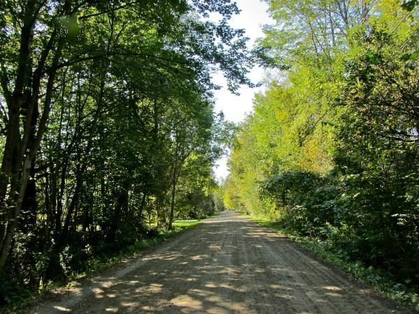 Bean Road summer.resized